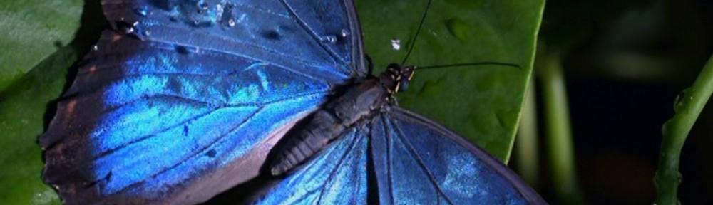 Richard Hammond's Miracles of Nature